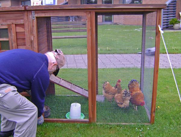 Høns i hus2-maj15